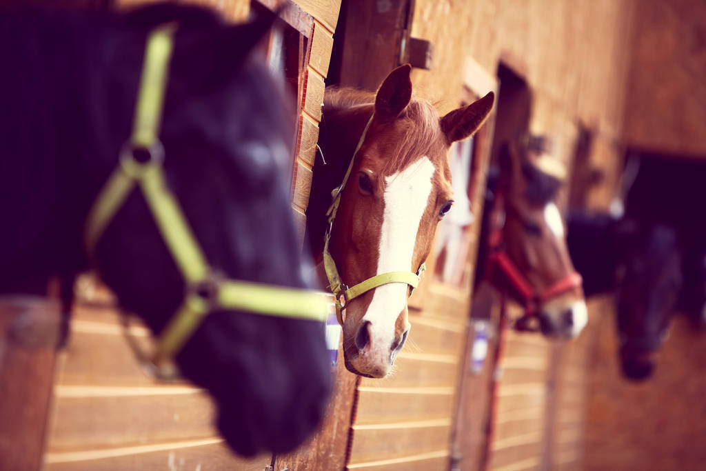Horse Purchase Agreement Awesome Learn How to Start A Horse Boarding Business