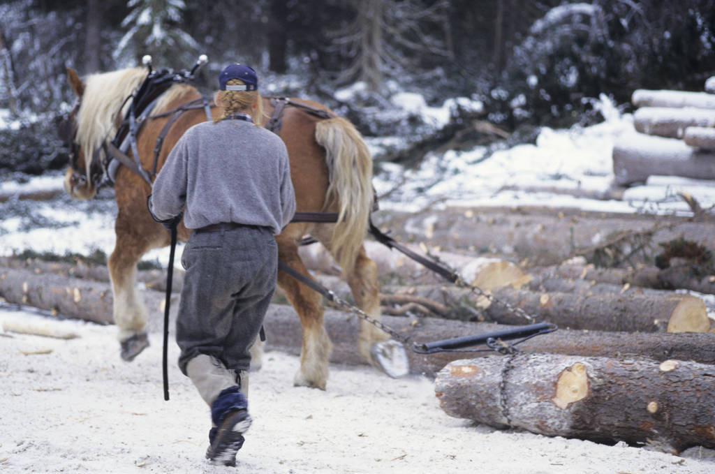 Horse Purchase Agreement Unique Small Scale Logging Business Ideas
