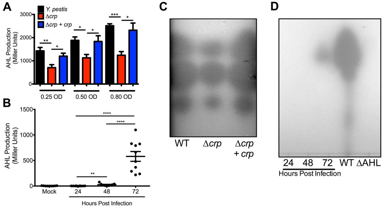 Massachusetts Registry Of Vital Records and Statistics Impressive the Cyclic Amp Receptor Protein Regulates Quorum Sensing and