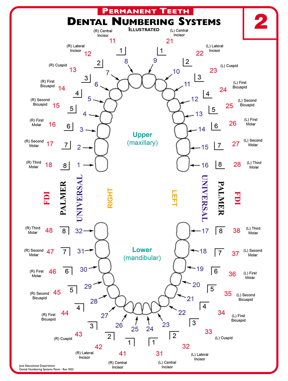 Tooth Loss Chart Great A Guide to Understanding Dental Lingo From 123dentist